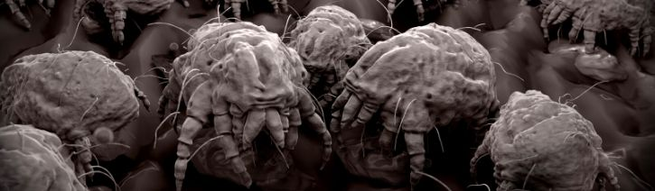 Image of dust mites.