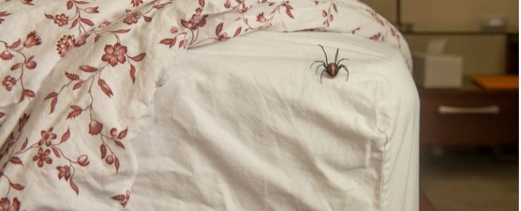 Spider on Bed.